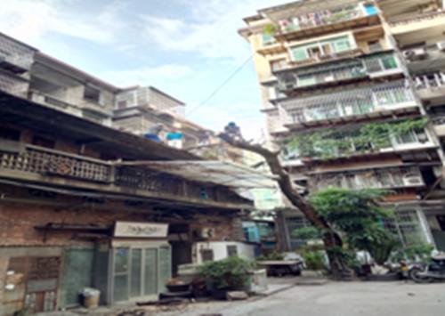 清除枯树,排除安全隐患