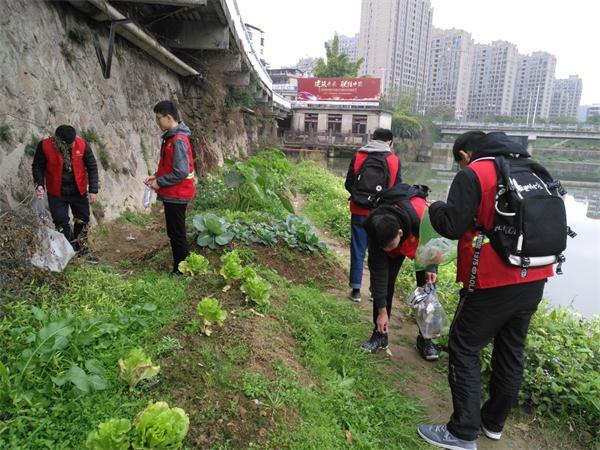 东坡社区关工委1分钟快3组织 青年志愿者清理河道垃圾